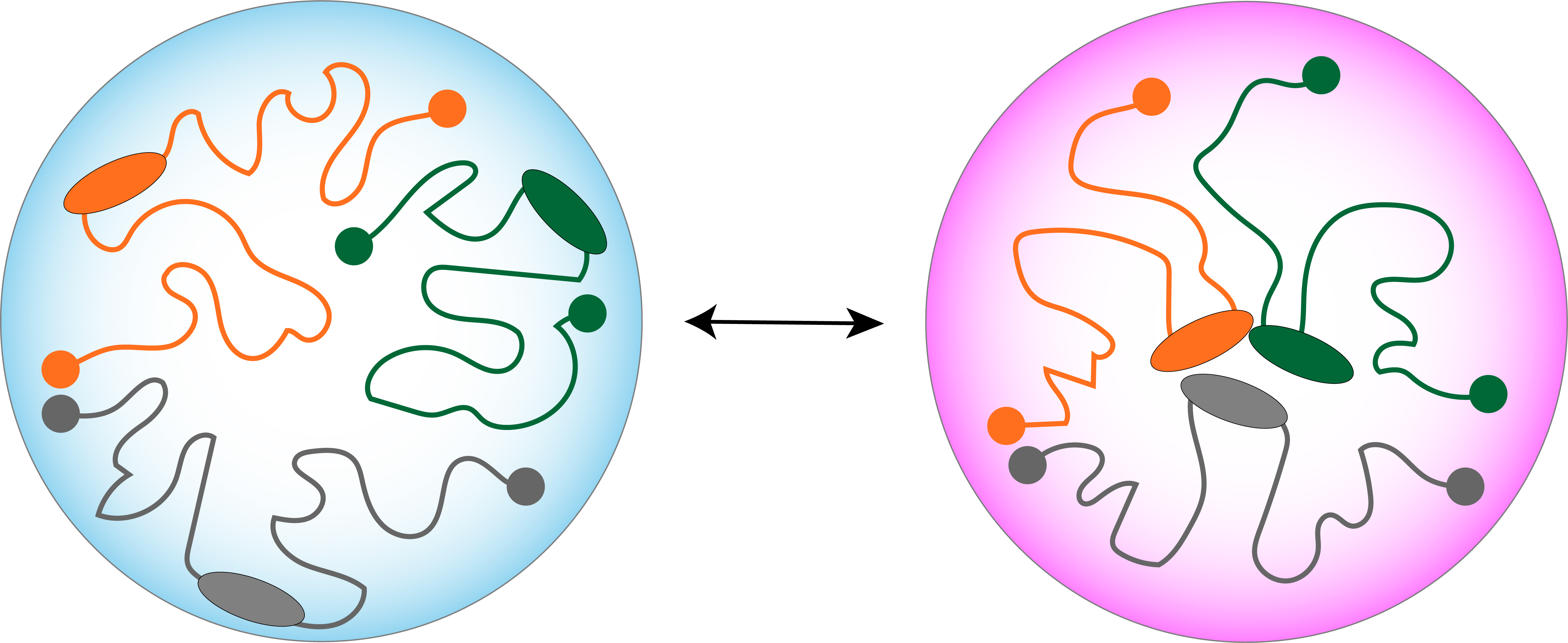 Image of two cell conditions showing how nuclear DNA can rearrange