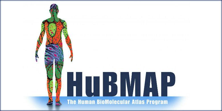 New Nimh Grants Fund Cross Lifespan >> The Human Biomolecular Atlas Program Hubmap Nih Common Fund