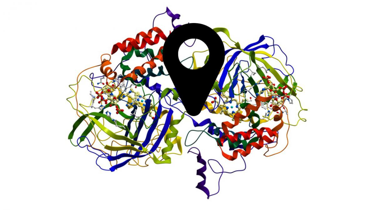 Picture of the Protein Structure of an Enzyme