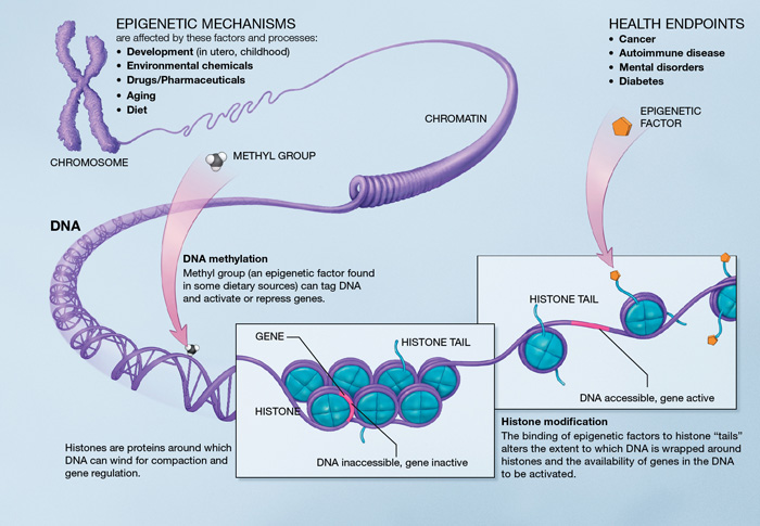 Epigenomic Mechanisms