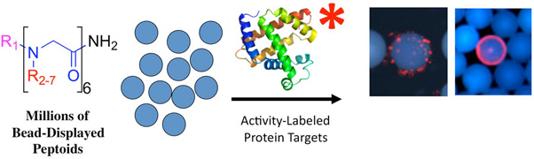 MASSIVELY PARALLEL IDENTIFICATION OF PROTEIN LIGANDS