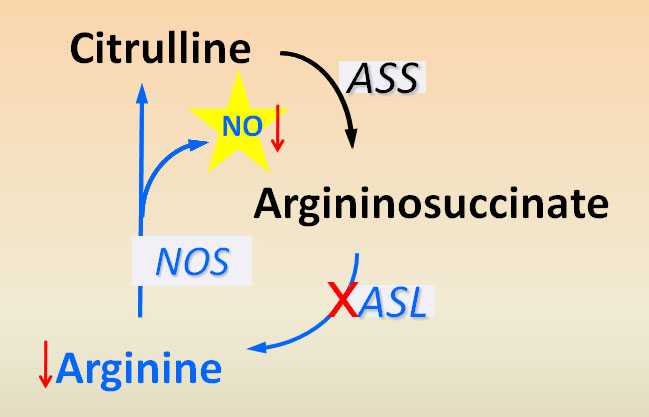 ARGININOSUCCINATE LYASE IS AN ESSENTIAL REGULATOR OF SYSTEMIC NITRIC OXIDE PRODUCTION