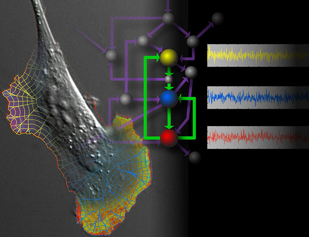 QUANTITATIVE IMAGING OF SIGNALING NETWORKS