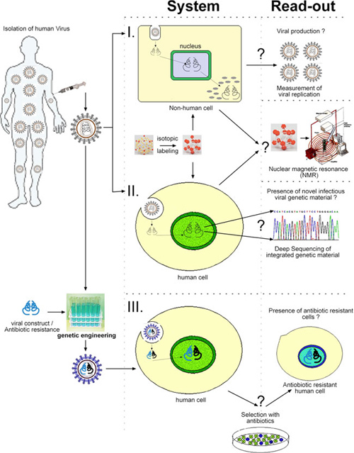 REPLICATION OF HUMAN ENDOGENOUS RETROVIRUSES IN MODERN HUMANS
