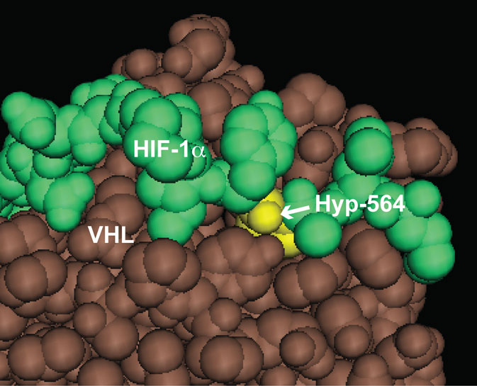 THE HYDROXYLPROLYLPROTEOME