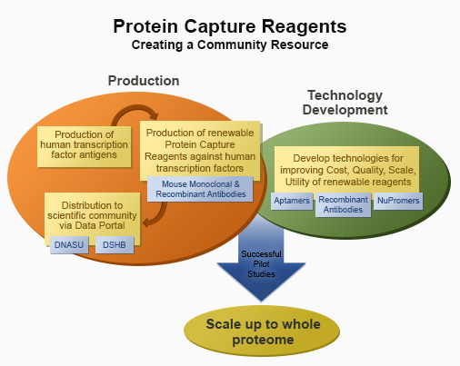 Schematic of Protein Capture Reagents program components