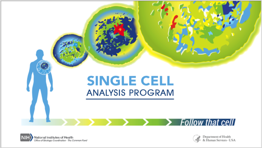 Single Cell Analysis Collage