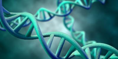 DNA Molecule 3D Rendering