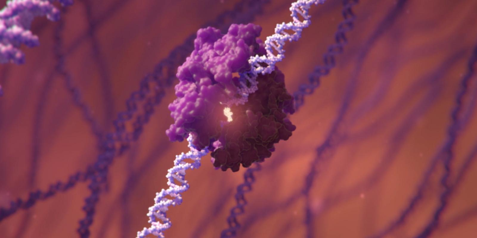 Genome Editing Tool Bound to DNA