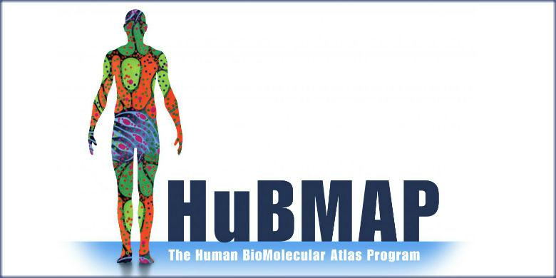The graphic identity for the Human BioMolecular Atlas Program that features a silhouette of a human body with the name of the program.