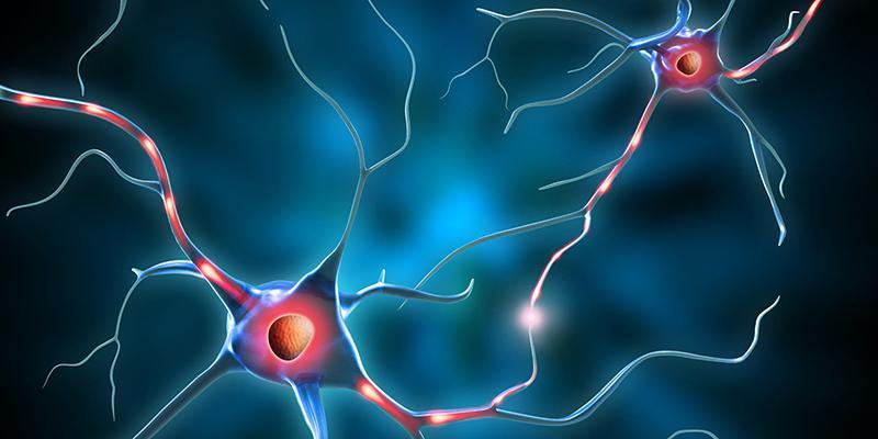 Stylized drawing of a neuron