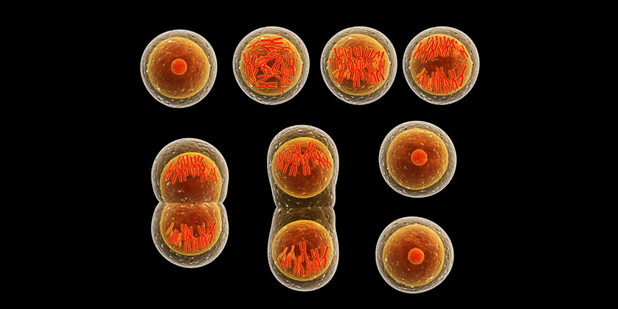 Process of Cell Division