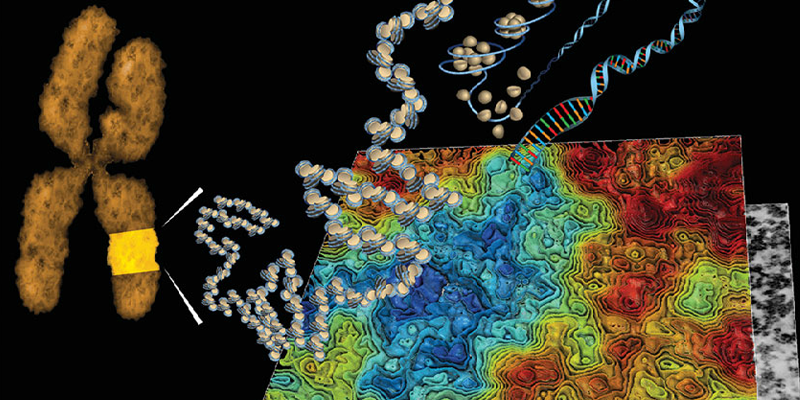 Visualizing the Nucleus in 3D