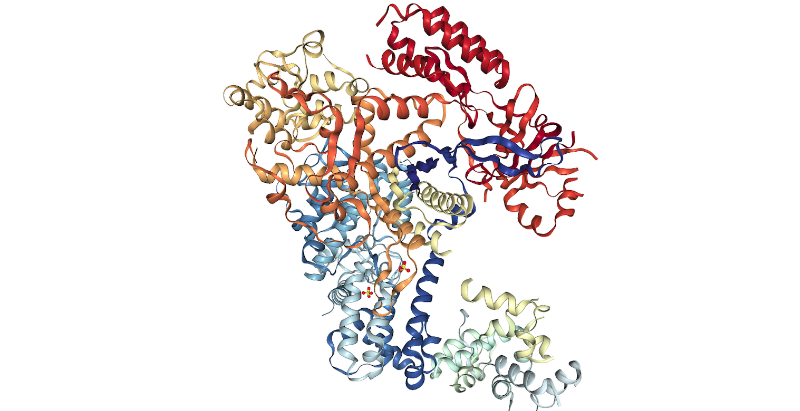 3D structure of Cas9 protein