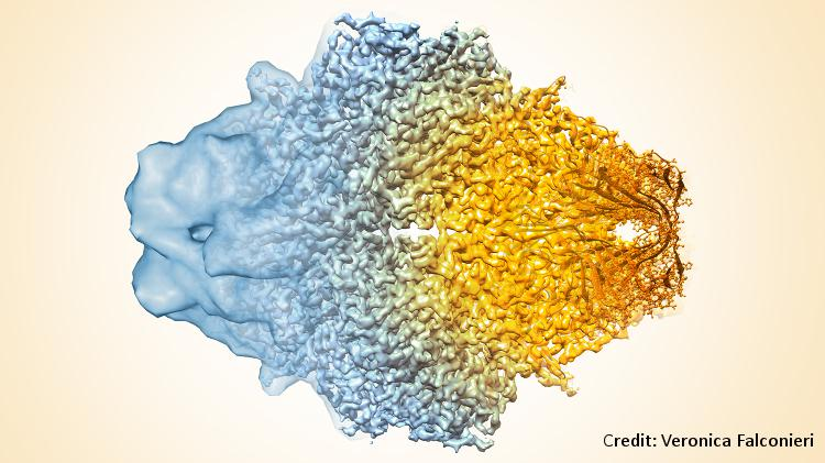 Composite image of beta-galactosidase showing how cryo-EM's resolution has improved dramatically in recent years