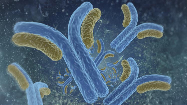 Digital illustration of antibodies