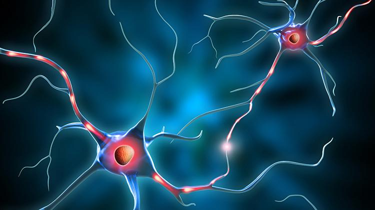 Stylized drawing of a neuron
