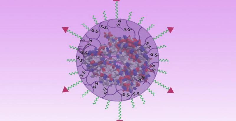 Nanocapsule containing its gene payload. Chen & Abdeen, UW