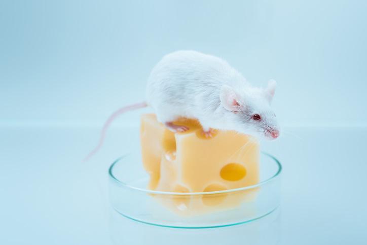 mouse metabolomics image