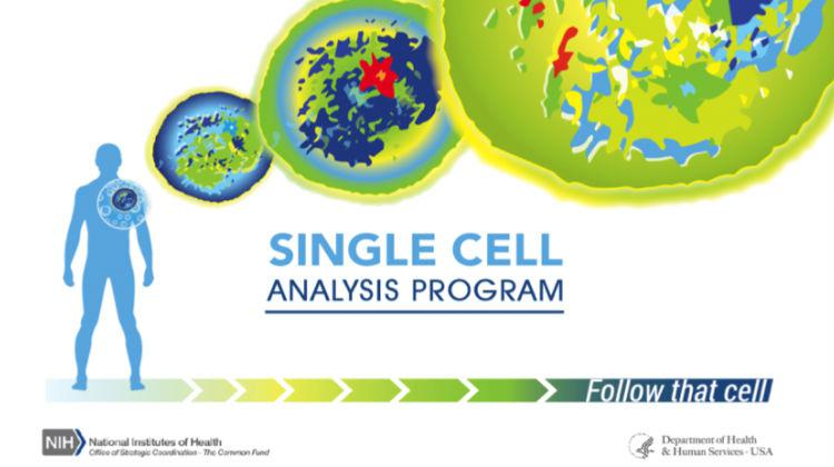 The graphic identity for the Single Cell Analysis program